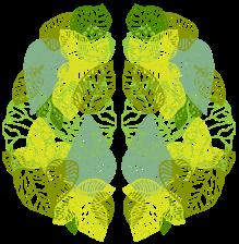 rainforest-mind-leaf-brain2